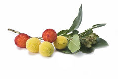 Arbutus fruits. Royalty Free Stock Photo
