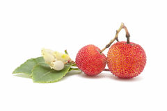 Arbutus and leaves Royalty Free Stock Image