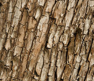 Arbutus Tree Bark. Close up of the bark at the base of an arbutus tree Stock Photo