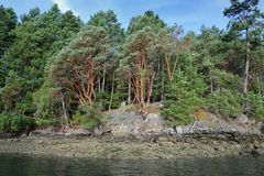 Arbutus Trees, Gulf Islands. Arbutus trees in the Gulf islands. British Columbia, Canada Stock Photography
