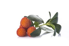 Arbutus unedo fruits isolated on a white background. Arbutus unedo fruits with flowers and leaves isolated on a white background Royalty Free Stock Photo