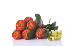 Arbutus unedo fruits isolated on a white background. Arbutus unedo fruits with flowers and leaves isolated on a white background Stock Images