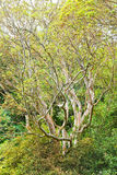 Arbutus unedo tree in autumn Stock Photos