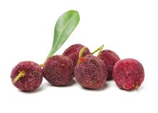 Arbutus on white background stock images