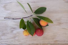 Arbutus Royalty Free Stock Images