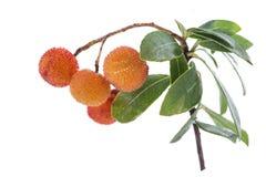 Arbutustak en zeer rijp oranje fruit op een witte achtergrond Royalty-vrije Stock Afbeeldingen