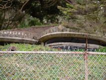 Arcón que se sienta en colina herbosa con la cerca de chainlink en primero plano fotografía de archivo libre de regalías