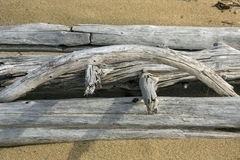 Arc of a bleached driftwood log on the beach, Maine. Stock Images
