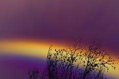 Arc-en-ciel au-dessus d'arbre sec de branche de ciel de silhouette colorée de dos Image libre de droits