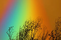 Arc-en-ciel au-dessus d'arbre sec de branche de ciel de silhouette colorée de dos Photographie stock libre de droits