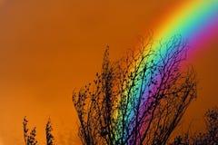 Arc-en-ciel au-dessus d'arbre sec de branche de ciel de silhouette colorée de dos Images stock