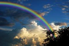Arc-en-ciel au-dessus d'arbre sec de branche de silhouette de dos de ciel de coucher du soleil Photographie stock libre de droits