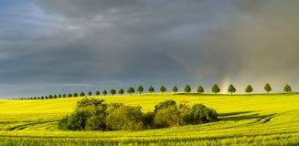 Arc-en-ciel au-dessus d'un champ de jeune maïs Photo stock