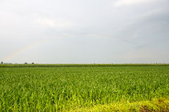 Arc-en-ciel au-dessus de campagne de Verceil Photographie stock