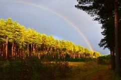 Arc-en-ciel au-dessus de la forêt de pin au coucher du soleil Automne Image stock