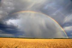 Arc-en-ciel au-dessus de la zone de blé images libres de droits