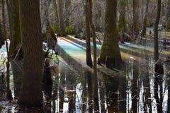 Arc-en-ciel dans le marais photographie stock libre de droits