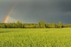 Arc-en-ciel de ciel au-dessus de champ et forêt après tempête Image libre de droits