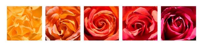 Arc-en-ciel de coeurs de Rose Photographie stock
