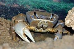 arc-en-ciel de crabe Photos libres de droits