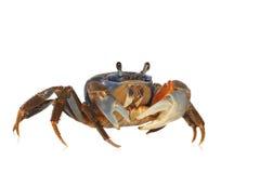 arc-en-ciel de crabe Image stock