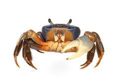 arc-en-ciel de crabe Photo stock
