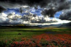 Arc-en-ciel de fleur Photos stock
