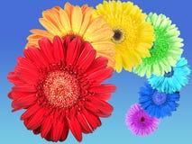 Arc-en-ciel des fleurs Photos libres de droits