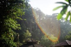 Arc-en-ciel et la forêt images libres de droits