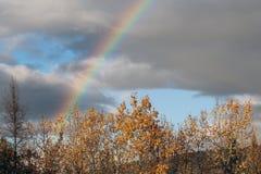 Arc-en-ciel lumineux et bel au-dessus des arbres Image libre de droits