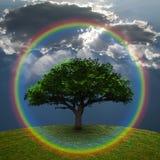 Arc-en-ciel vert d'arbre Photos libres de droits