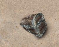 Arca do tesouro velha na areia suja da praia fotografia de stock royalty free