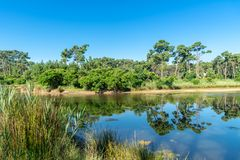 Arcachon Baai, Frankrijk, het natuurreservaat van Piraillan dichtbij Cap Ferret Royalty-vrije Stock Foto