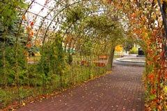 Arcada com verde amarelo e folhas alaranjadas no parque como o fundo brilhante colorido bonito da queda do outono Imagem de Stock Royalty Free