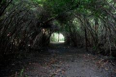 Arcada natural 01 da árvore Fotografia de Stock Royalty Free