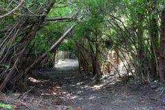 Arcada natural 03 del árbol Imagen de archivo libre de regalías