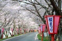 Arcada romântica das flores da árvore de cereja (Sakura) e de cargos cor-de-rosa da lâmpada do estilo japonês ao longo de uma est Foto de Stock Royalty Free