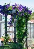 Arcade admirablement couverte de clématite fleurissante Photographie stock