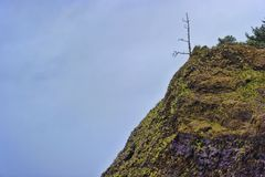 Dead tree on coastal hillside. At Arcadia Beach looking up stands a lone dead tree weathered by the onslaught of coastal weather on the Oregon Coast Stock Photos