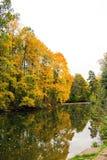Arce amarillo del otoño sobre el agua Imagen de archivo