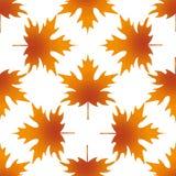 Arce de la hoja del otoño, modelo inconsútil Foto de archivo libre de regalías