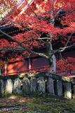 Arce japonés durante caída delante del templo imagen de archivo libre de regalías