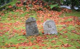 Arce rojo con el fondo de Japón Foto de archivo libre de regalías