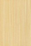 Arce (textura de madera) Foto de archivo libre de regalías