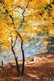 Arce y hojas del otoño en el palacio de Changgyeonggung en Seúl, Corea imagenes de archivo