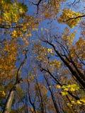 Arces del otoño imagenes de archivo