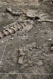 Archäologiegrabung Stockbild