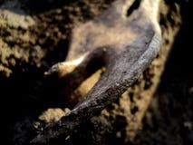 Archäologieknochen Stockfoto