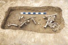 Archäologische Aushöhlungen bemannen und finden Knochen eines Skeletts in einer menschlichen Beerdigung, Arbeitsgerät, Machthaber stockfoto