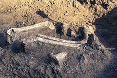 Archäologische Aushöhlungen und Entdeckungsknochen eines Skeletts in einer menschlichen Beerdigung, ein Detail der alten Forschun stockfotos
